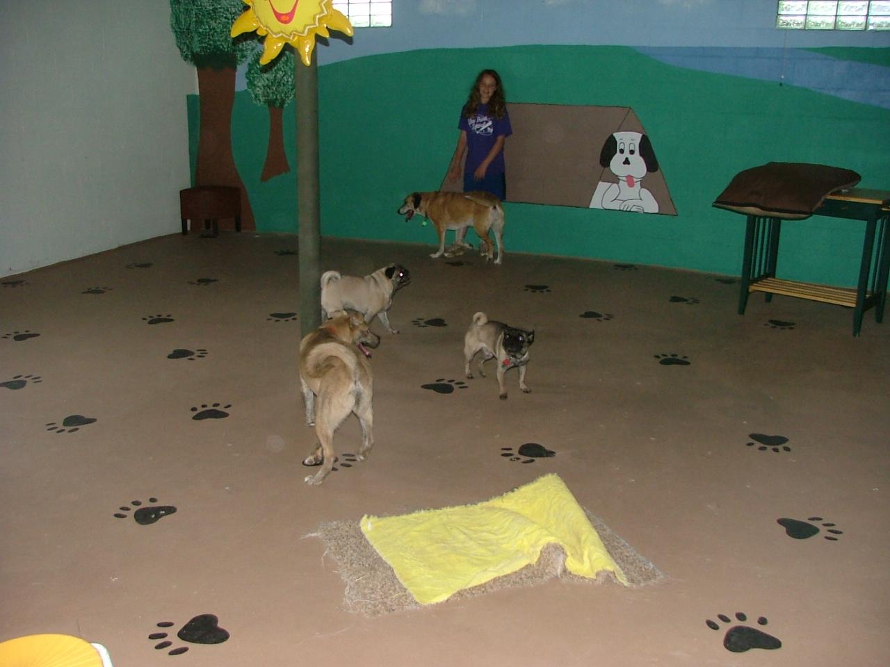 Inside Doggie Day Kamp
